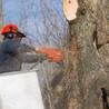 Bloom's Tree Service