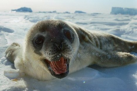 A Baby Seal Begins Its Life Science 4 5 6