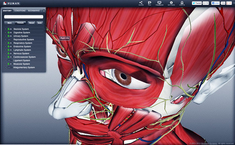 Dissecting the BioDigital Human: A 3D Anatomy Lesson | 1-MegaAulas - Ferramentas Educativas WEB 2.0 | Scoop.it
