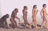 Hominisation : Il suffisait d'inventer la bipédie et d'acquérir un gros cerveau | Aux origines | Scoop.it