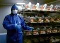 """OGM : """"On n'aurait jamais imaginé qu'il y aurait autant de tumeurs""""   Sustainable agriculture   Scoop.it"""