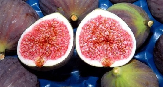 Black figs grown in Turkey's Bursa get geographical indication registration certificate - Daily Sabah