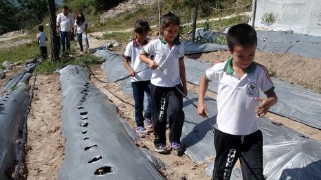 Training our Children for Unemployment | Social Entrepreneur | Scoop.it