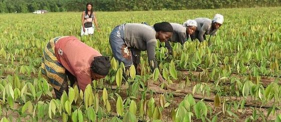 Agriculture : l'assurance agricole trace son sillon