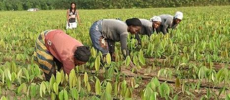 Agriculture : l'assurance agricole trace son sillon | CIHEAM Press Review | Scoop.it