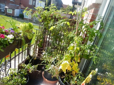 Attachment Mummy: Balcony Gardening | Think Like a Permaculturist | Scoop.it