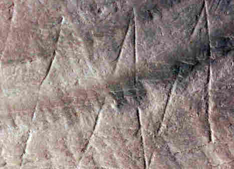Earliest Human Engraving Or Trash From An Ancient Lunch? - NPR | AncientHistory@CHHS 2012-13 | Scoop.it