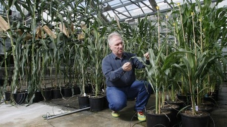 Garden Corner- Biodiversity, Indoor Farming, PC Gardening | Longevity science | Scoop.it