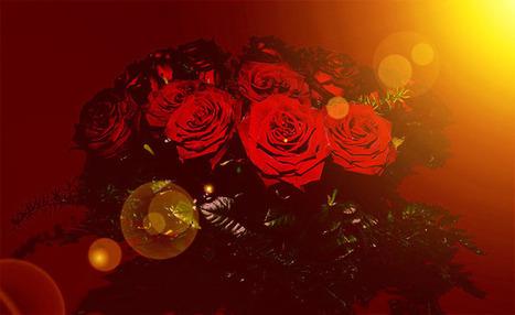 Kostenlose rosen bilder
