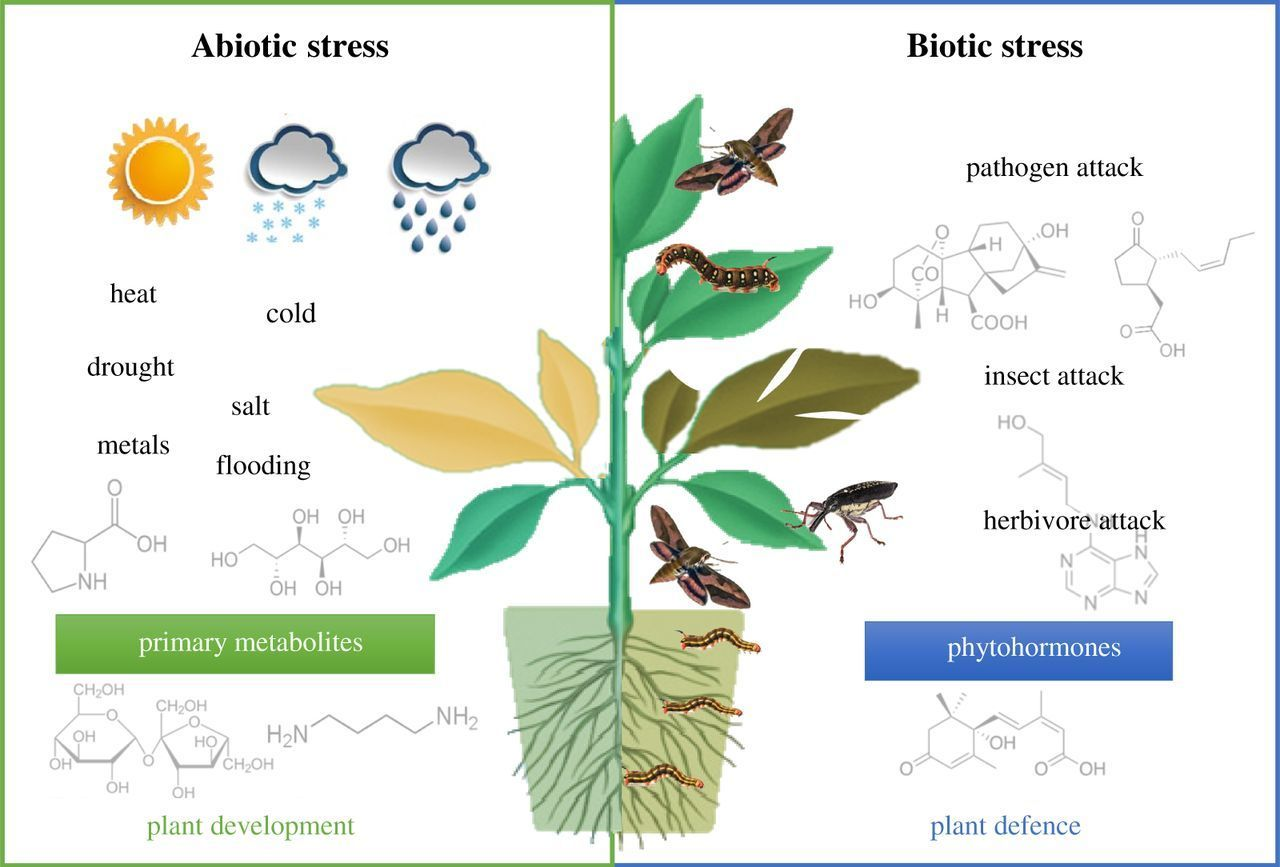 plants responses into water stress A decade has passed since plant responses to water stress were reviewed in this  series (299), although writing of a review nature has been voluminous in sym.