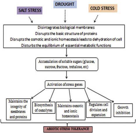 Role of sugars under abiotic stress | Plant Gene Seeker -PGS | Scoop.it