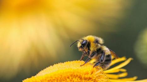 Moins de papillons et d'abeilles : une étude pointe l'agriculture intensive – EURACTIV.fr | Histoires Naturelles | Scoop.it