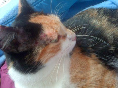 Il «pète un plomb» et tire des billes sur le chat | CaniCatNews-actualité | Scoop.it