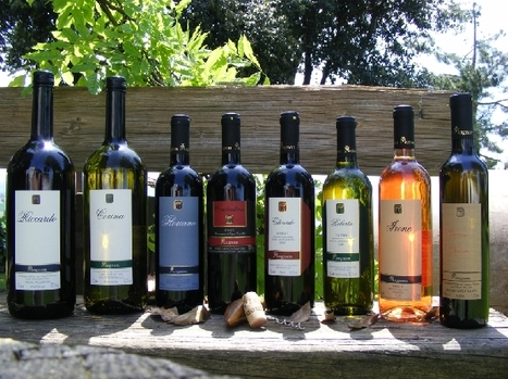 Organic Wines Le Marche: Mognon, Castel Colonna | Wines and People | Scoop.it