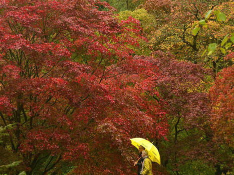 Fall foliage 2014 | The Miracle of Fall | Scoop.it