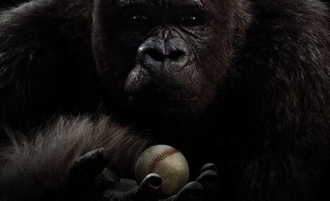 First Look At Mr. Go, Korea's Baseball Playing CG Gorilla | Animation News | Scoop.it
