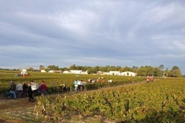 Bordeaux 2014: Rush of releases but buyers still in short supply | Autour du vin | Scoop.it