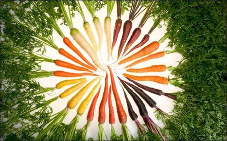 Why are carrots orange? Genome sequencing gives clues | Amazing Science | Scoop.it