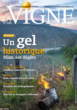 Autour du vin : 2016, année de l'œnotourisme | Oenotourisme en Entre-deux-Mers | Scoop.it