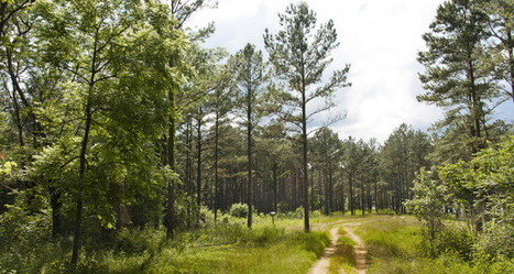 Mississippi timber prices hover around 2014 levels   Timberland Investment   Scoop.it
