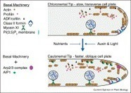 ScienceDirect.com - Current Opinion in Plant Biology - Physcomitrella patens: a model for tip cell growth and differentiation | plant cell genetics | Scoop.it