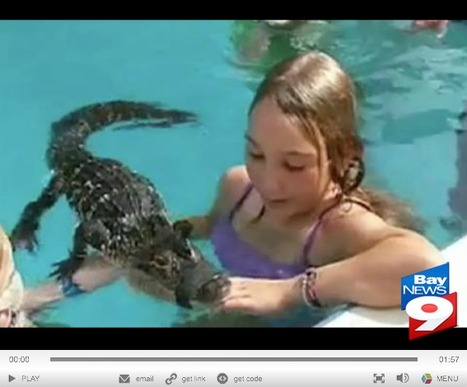Party's Over: Florida wildlife officials stop children's alligator pool parties (VIDEO) | The Billy Pulpit | Scoop.it