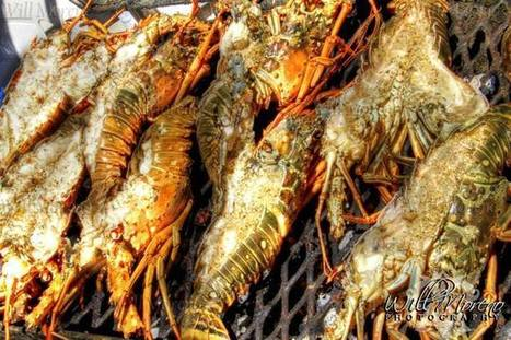 It was all about Lobster in Belize this weekend in Caye Caulker and Placencia | Filmbelize | Scoop.it