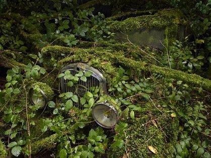 FOTO: Cum maşinile vechi şi uitate sunt recuperate de natură | Photography & Photographers | Scoop.it