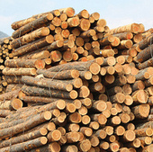 Timber harvests and log consumption have been shifting   Timberland Investment   Scoop.it