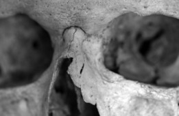 Violence in Neolithic Denmark and Sweden   Archaeology News   Scoop.it
