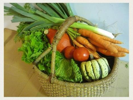 Vous aimeriez recevoir chaque semaine, ou tous les 15 jours, un panier de légumes BIO et DE SAISON produit par de jeunes paysans dynamiques? | Côté Jardin | Scoop.it
