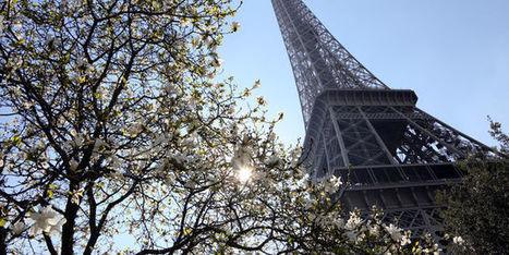 Les arbres rafraîchissent l'air des villes tout en réduisant leur pollution | Les coups de coeur de D'Dline 2020 | Scoop.it