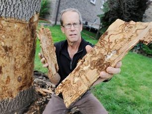Emerald ash borer infests 40-year-old tree - InsideHalton.com | Plant Pests - Global Travellers | Scoop.it