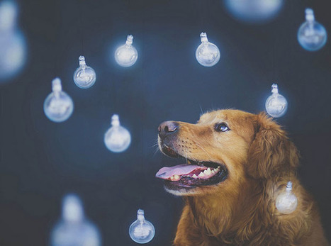 Teen Girl Shoots Beautiful and Creative Portraits of Her Pet Dogs | Mobile Photography | Scoop.it
