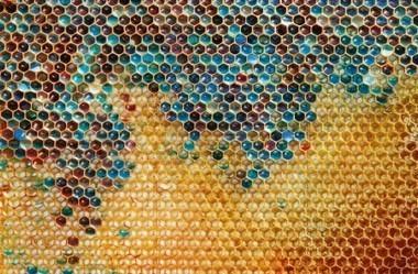 En Alsace, les abeilles butinent le sucre des poubelles faute de fleurs - Les Observateurs | Sauvegarde et Protection des animaux | Scoop.it