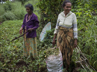 ACIAR: Sowing the seeds in 2013 and beyond | Food and Nutrition | Scoop.it