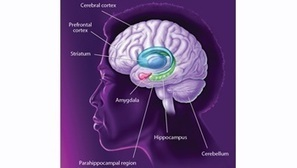 Different Facets of Memory - BrainFacts.org   With My Right Brain   Scoop.it