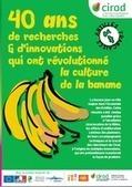 40 ans d'innovations qui ont révolutionné la culture de la banane | Les techniques, l'innovation, la recherche, l'économie et la commercialisation en agriculture | Scoop.it