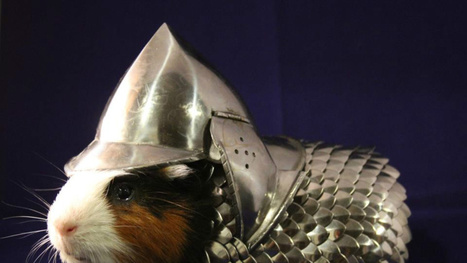Keep your guinea pig protected with a rodent-sized suit of armor | Randoms | Scoop.it