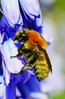 Pesticides Harm Hive Behavior | Chemical & Engineering News | Pollinators: a plant focus, for backyards | Scoop.it