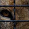 zoos should not exist