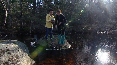 New culprit identified in chronic acid rain problem - CBC.ca | Nova Scotia Fishing | Scoop.it