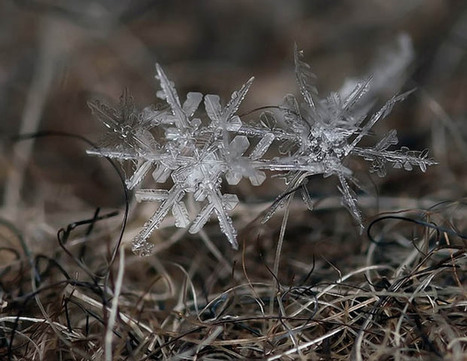 Macro Photography Makes Snowflakes Larger Than Life - Artsnapper | Cris Val's Favorite Art Topics | Scoop.it