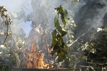 Déchets verts : une filière à créer pour valoriser les branches - Le Pays BHM   Action Durable   Scoop.it