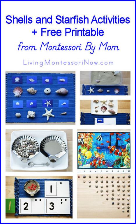 Shells and Starfish Activities + Free Printable from Montessori By Mom | Montessori Inspired | Scoop.it