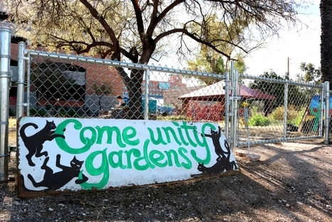 UA Community Garden offers opportunities for students  to grow | CALS in the News | Scoop.it
