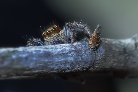 Untitled | Spiders | Scoop.it