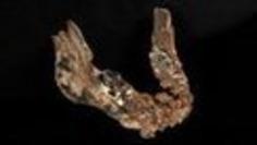 Scientists find new human species | Cultural History | Scoop.it