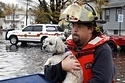 Pets Who Got Some Help And Made It Through The Storm | Feline Health and News - manhattancats.com | Scoop.it