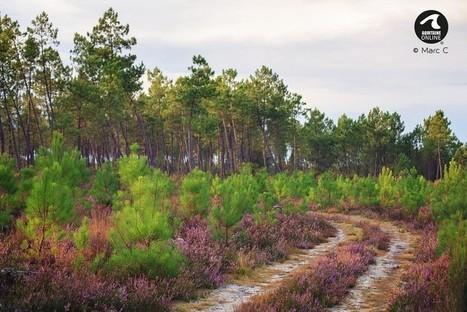 La forêt domaniale du littorale dunaire | Revue de presse Pays Médoc | Scoop.it